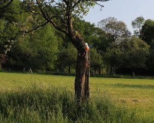Spaßvogel sitzt im Baum