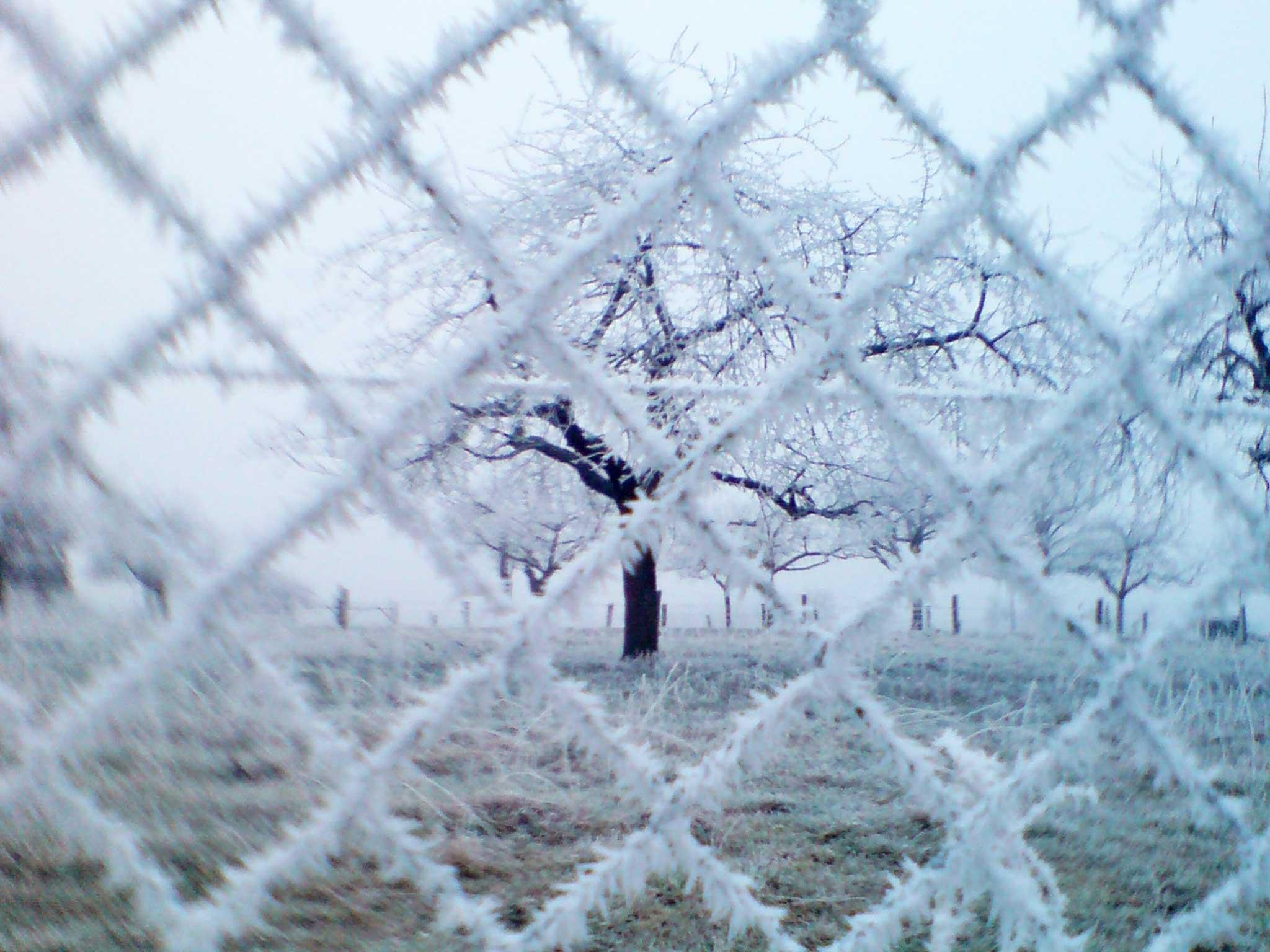 Wunderschön, winterlich verzauberter Zaun auf der Herchenhainer Höhe