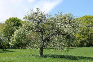 Erholung für Leib und Seele in frischer Natur
